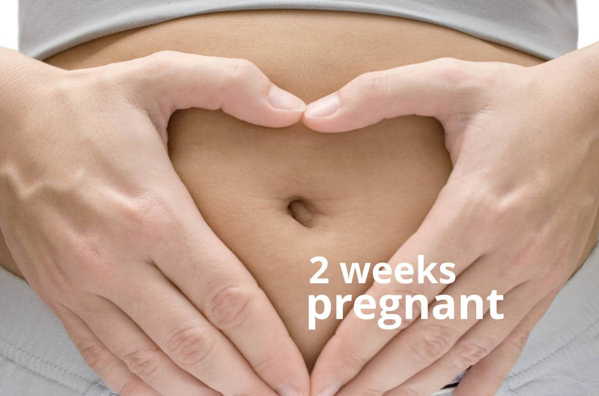 2 weeks pregnant. View Larger Image ...