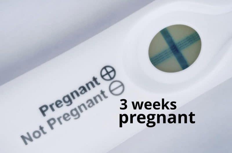 3 weeks pregnant